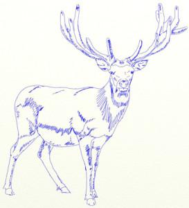 Как нарисовать Оленя поэтапно в 6 шагов 6
